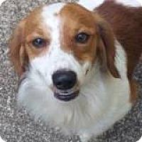 Adopt A Pet :: Jake Marisnick - Houston, TX