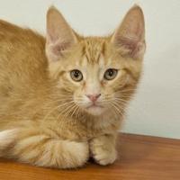 Adopt A Pet :: Frank - Elk Grove Village, IL