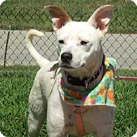 Adopt A Pet :: Jojo - Somerset, KY