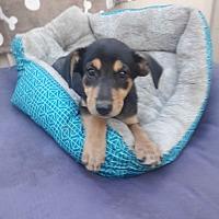 Adopt A Pet :: Jackie - LAKEWOOD, CA