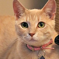 Adopt A Pet :: Peaches Alexander - Edmonton, AB