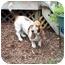 Photo 3 - Basset Hound Dog for adoption in Montgomery, Alabama - Scout