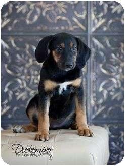Collie Mix Puppy for adoption in Vandalia, Illinois - Daisy