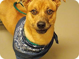 Chihuahua/Dachshund Mix Dog for adoption in Villa Rica, Georgia - J.R
