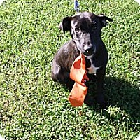 Adopt A Pet :: Maxwell - Knoxville, TN