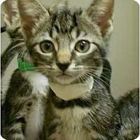 Adopt A Pet :: Hennessey - Maywood, NJ