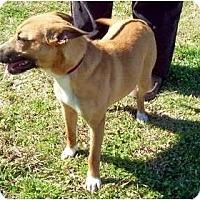 Adopt A Pet :: SusieQ - courtesy post - Glastonbury, CT