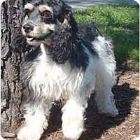 Adopt A Pet :: Major - Sugarland, TX