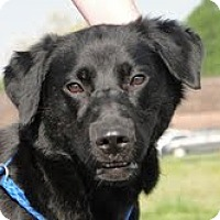 Adopt A Pet :: Ava - Lewisville, IN