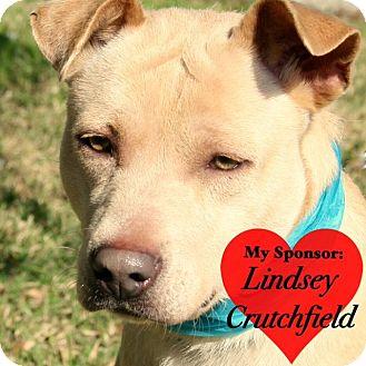 Labrador Retriever Mix Dog for adoption in San Leon, Texas - Goldie