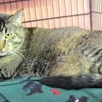 Adopt A Pet :: Natasha - Reeds Spring, MO