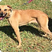 Adopt A Pet :: Amberlynn#6F (Roxy) - Orlando, FL