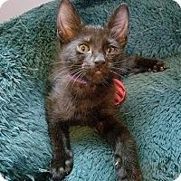 Adopt A Pet :: Milhouse - Tampa, FL