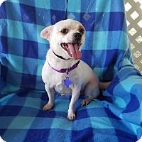 Adopt A Pet :: Swan - San Antonio, TX