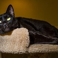 Adopt A Pet :: Paris - Palm Springs, CA