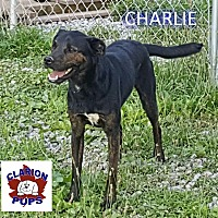 Adopt A Pet :: CHARLIE - Strattanville, PA