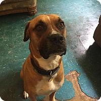 Adopt A Pet :: Charlie (AZ) - Woodstock, IL