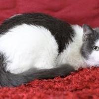 Adopt A Pet :: Twinkle - Blackwood, NJ