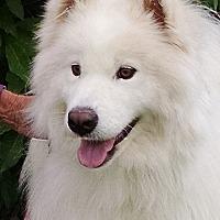Adopt A Pet :: Gogi (** COURTESY LISTING **) - Arvada, CO