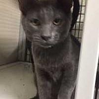 Adopt A Pet :: Lars - Fort Madison, IA