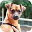 Photo 1 - Chihuahua Mix Dog for adoption in Cleveland, Georgia - Radar