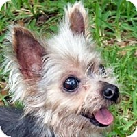Adopt A Pet :: Tracy - Jacksonville, FL