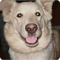 Adopt A Pet :: Miko - Rigaud, QC