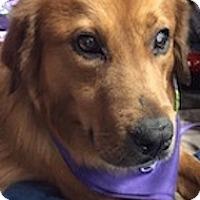 Adopt A Pet :: Dash - Knoxville, TN