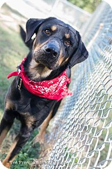Rottweiler Mix Dog for adoption in Muldrow, Oklahoma - Damien
