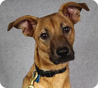 Retriever (Unknown Type) Mix Dog for adoption in Minneapolis, Minnesota - Miley