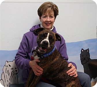 Boxer Mix Puppy for adoption in Elyria, Ohio - Greta