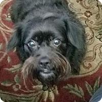 Adopt A Pet :: Precious - Ogden, UT