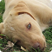Adopt A Pet :: Tucson Charlie - Broken Arrow, OK
