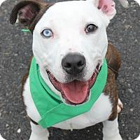 Adopt A Pet :: ROSCO - Clayton, NJ