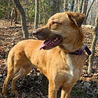 Adopt A Pet :: Cherry - Randleman, NC