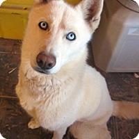Adopt A Pet :: Deshka - Santa Fe, NM