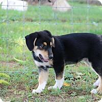 Adopt A Pet :: Cassie - Greeneville, TN