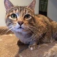Adopt A Pet :: Gemma - Wasilla, AK
