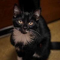 Adopt A Pet :: Mr. Pibb - Woodstock, GA