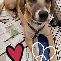 Adopt A Pet :: Faith - Colton, CA