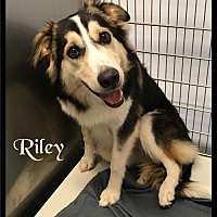 Adopt A Pet :: Riley - 472 / 2017 - Maumelle, AR