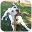 Photo 1 - Border Collie/Corgi Mix Dog for adoption in Yorba Linda, California - Pirate