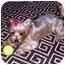 Photo 3 - Yorkie, Yorkshire Terrier Dog for adoption in Omaha, Nebraska - Scooter