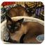 Photo 1 - Siamese Cat for adoption in Yorba Linda, California - Ariel and Beau
