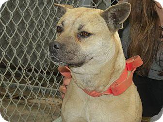 Labrador Retriever Mix Dog for adoption in Henderson, North Carolina - Ley-Ah