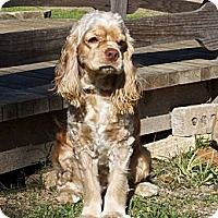 Adopt A Pet :: Ranger - Sugarland, TX