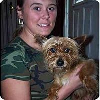 Adopt A Pet :: Reno - Honaker, VA
