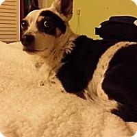 Adopt A Pet :: Polly - Santa Barbara, CA