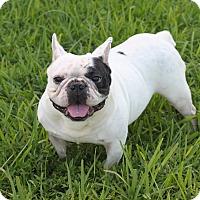 Adopt A Pet :: BOODAH - Pompano Beach, FL