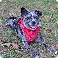 Adopt A Pet :: Skittles - Mocksville, NC